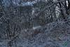 Заліщики.  2016, листопад, 17.  На зустріч з Василем Лопухом йшлося через Ущилівку