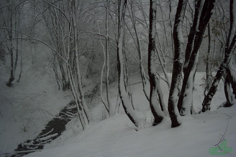 Заліщики. 2016, листопад, 13.  Перший сніг