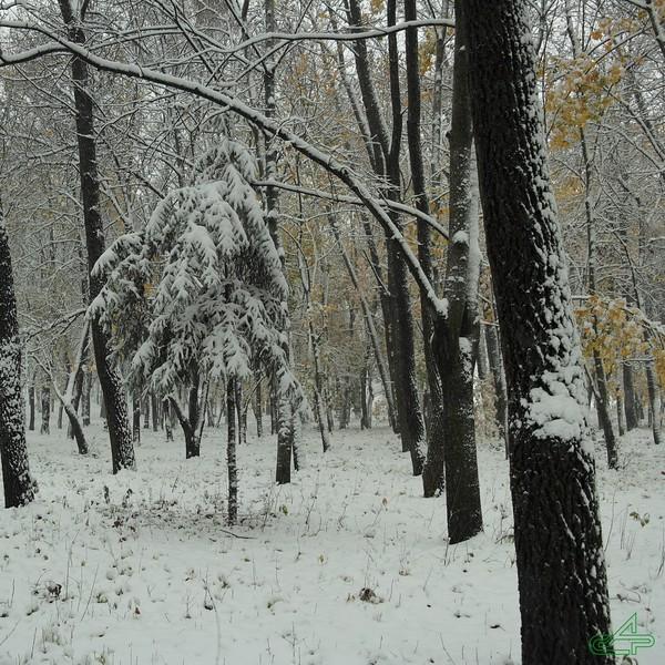 Заліщики. 2014, жовтень, 22.  Зима?