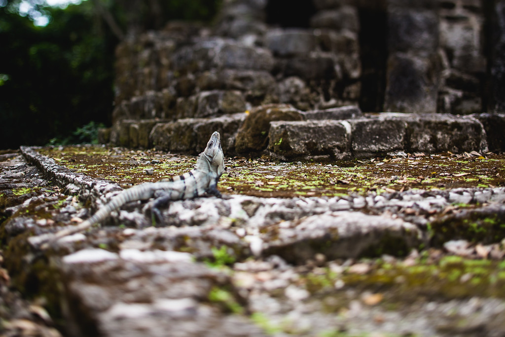Mayan Ruins Local - Cozumel, Mexico