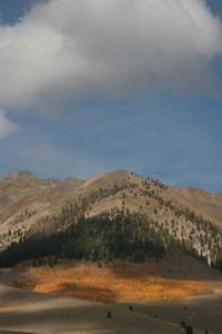 One of the largest aspen groves in the Wood River Valley lives at the mouth of Silver Canyon in the Boulder Mountains.