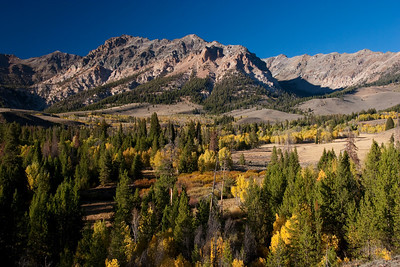 Silver Basin in the Boulder Mountains in full fall color.