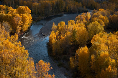 Golden cottonwoods flank the Big Wood River near Gimlet.