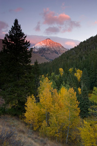 Alpenglow illuminates Cobb Peak behind yellow aspens.