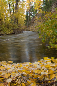 Hyndman Creek collects leaves just before joining the Big Wood River.