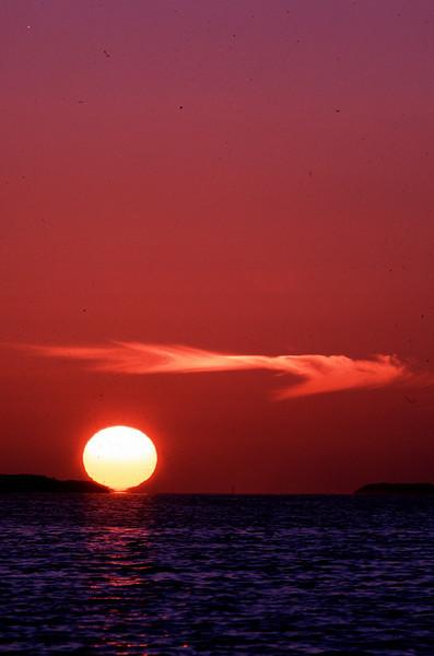 Sunset Wisp