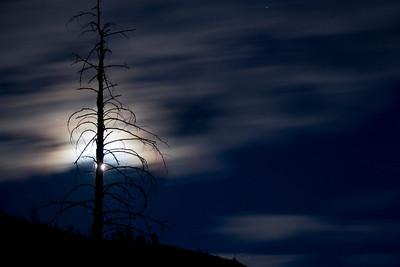 Full moon behind a dead snag.