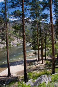 Pistol Creek and Ponderosa trees.