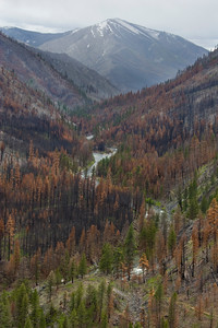 Looking up Greyhound Ridge above Dolly Lake.  Post 2007 burn.