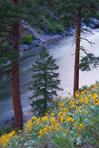 Flowers, trees, water.  The Middle Fork distilled.