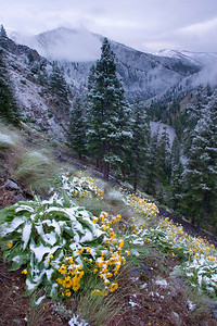 A june snowstorm dusts the canyon above Sunflower Hot Springs.