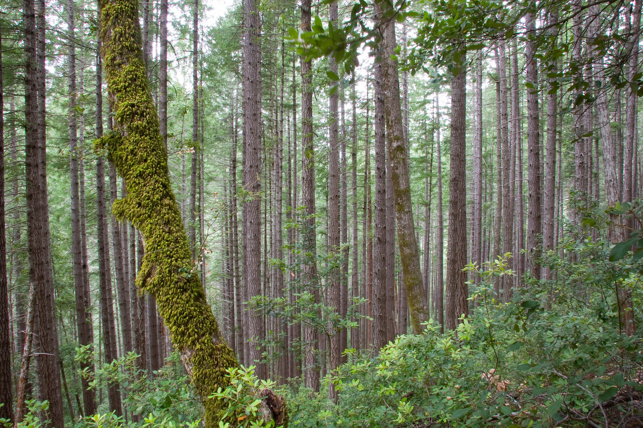 Dense Oregon forests flank both sides of the Rogue River Canyon.