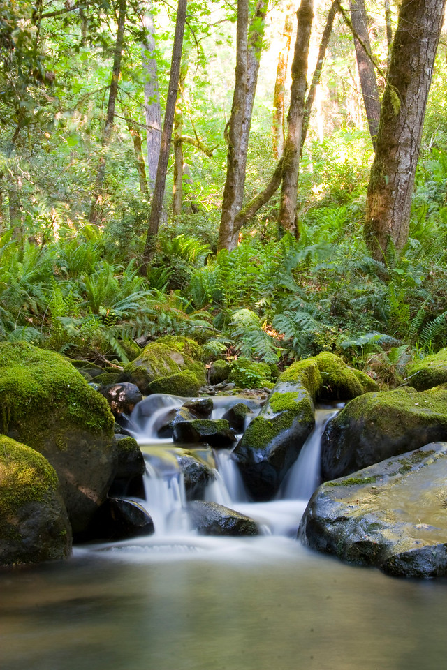 Mossy boulders, lush ferns, and numerous pools await adventures exploring the upper reaches of Flora Dell Creek.