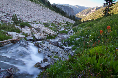 Leggit Creek cascades past lush wildflowers in August.