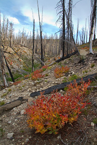 Regrowth and recovery from the Trailhead fire in Stanley Lake Creek