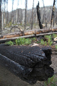 Burn detail in Stanley Lake Creek