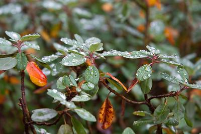 Raindrops detail