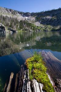 Moss on a log, Leggit Lake
