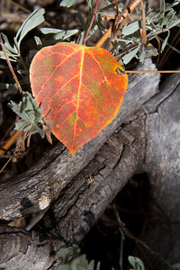 Fall leaf detail