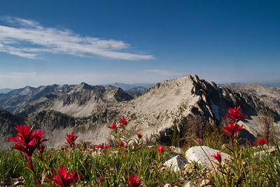 Looking south through Scarlet Paintbrush along the Queens/Little Queens divide from Blacknose Mtn.