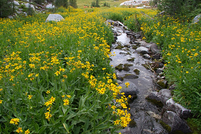 Scenic Lake Creek