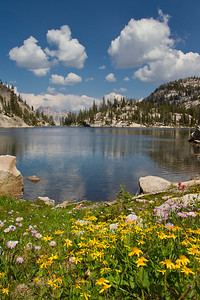 Flowers on the shore of Everly Lake with Elk Peak in the background.j