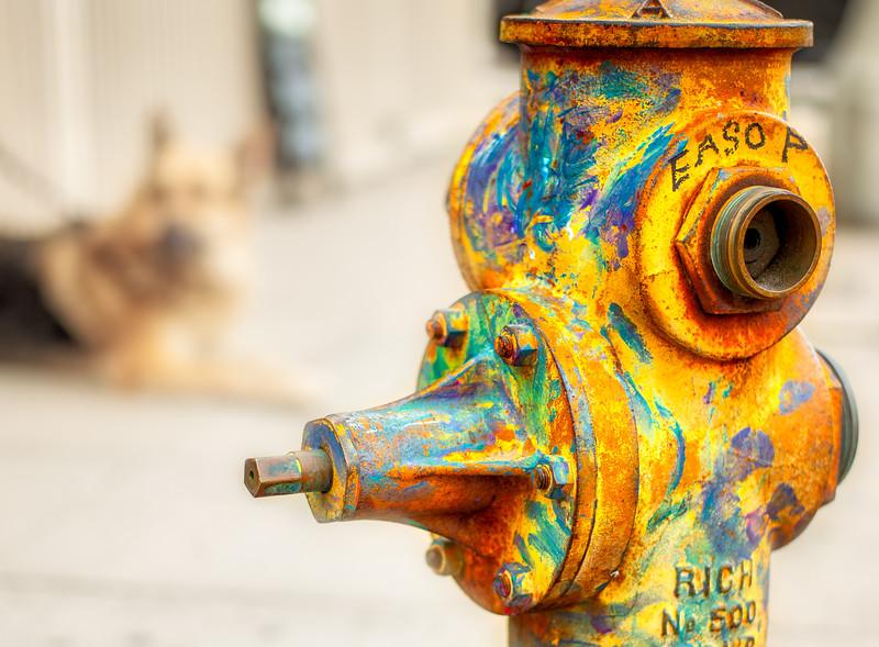 Fire Hydrant in Venice CA