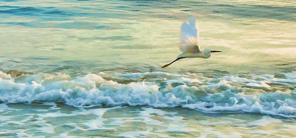 Egret Over the Waves