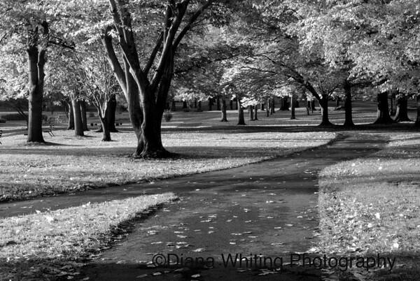 Hoopes Park Auburn NY