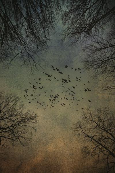 """Winter Sky"""