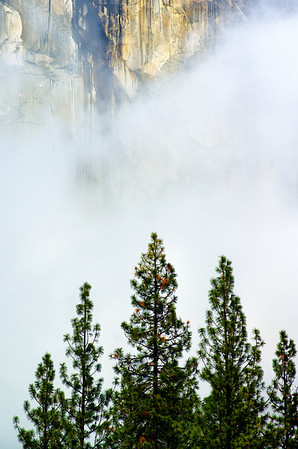 Rock, Mist, and Trees
