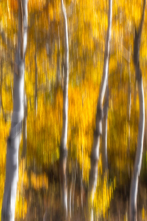 Aspen Abstract IV