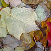 Autumn Leaves and Rain Drops