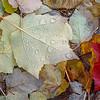 Autumn Leaves and Rain Drops
