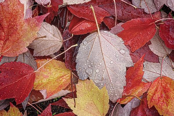 Love for Autumn II