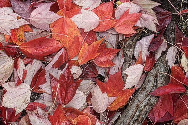 Love for Autumn