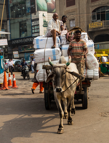 Carts, People and Cows in Delhi