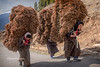 Gangtey: Bhutanese women carry straw from rice fields