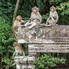 Long-tailed macaques at Angkor Wat