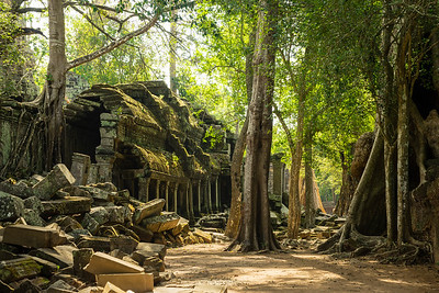 Ta Prohm temple, Angkor Archeological Park