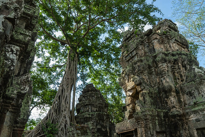 Ta Prohm, Angkor Archeological Park