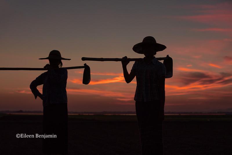 Farmers working field at sunset in Nyunt village - Mandalay