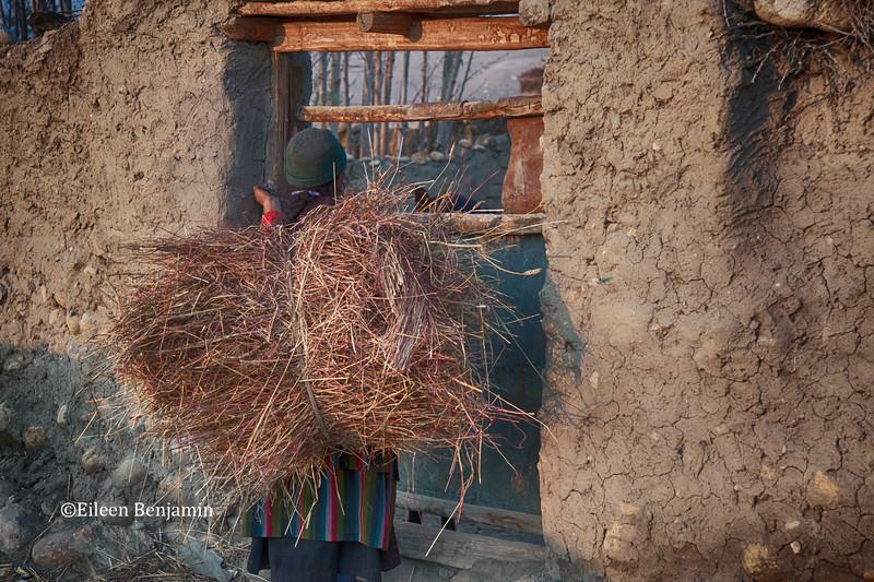 Woman iwith haystack n Tsarang