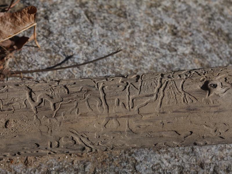 Worm hieroglyph