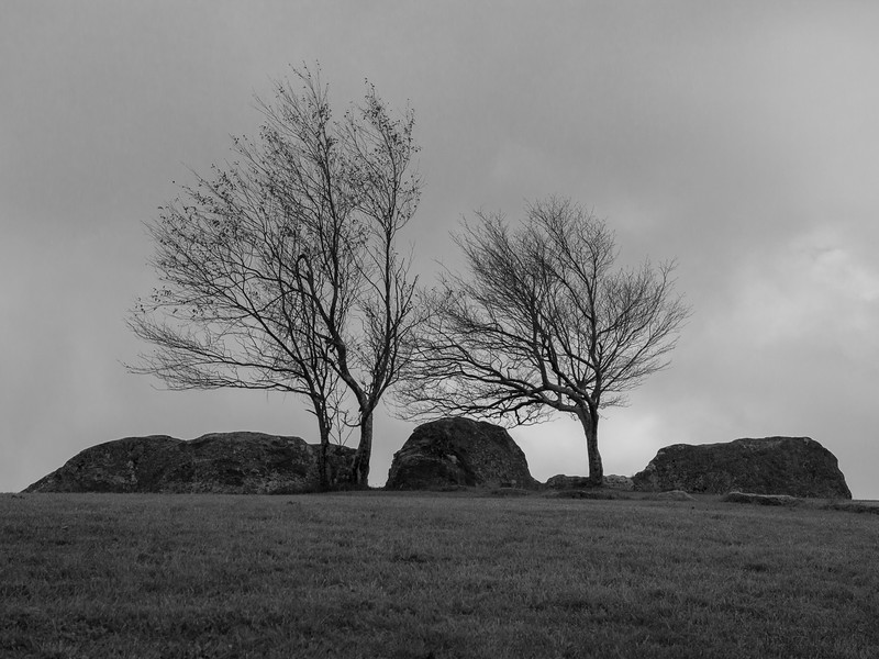 Three rocks, three trees