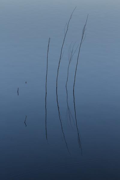 Blue haiku