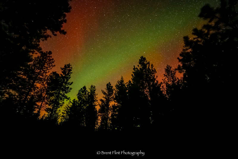DF.4530 - aurora borealis and treeline, Bonner County, ID.