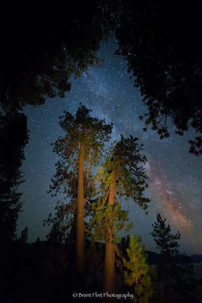 DF.4012 - Milky Way over ponderosa pines, Kaniksu National Forest, Idaho.