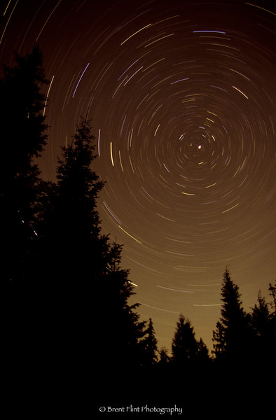 S.5034 - star trails and forest, Bonner County, ID.