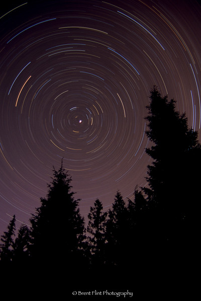 S.5040 - star trails and forest, Bonner County, ID.